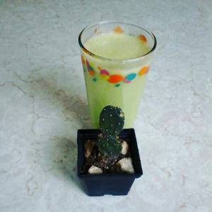 Powerful Cactus Smoothie That Will Make You Healthier | Wonder Fabi